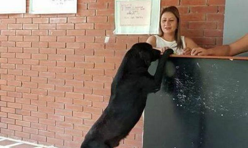 Cão utiliza folhas como dinheiro para comprar seus petiscos