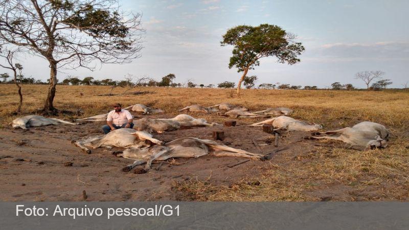 Cerca de 100 cabeças de gado morrem após frio de 9°C em MT