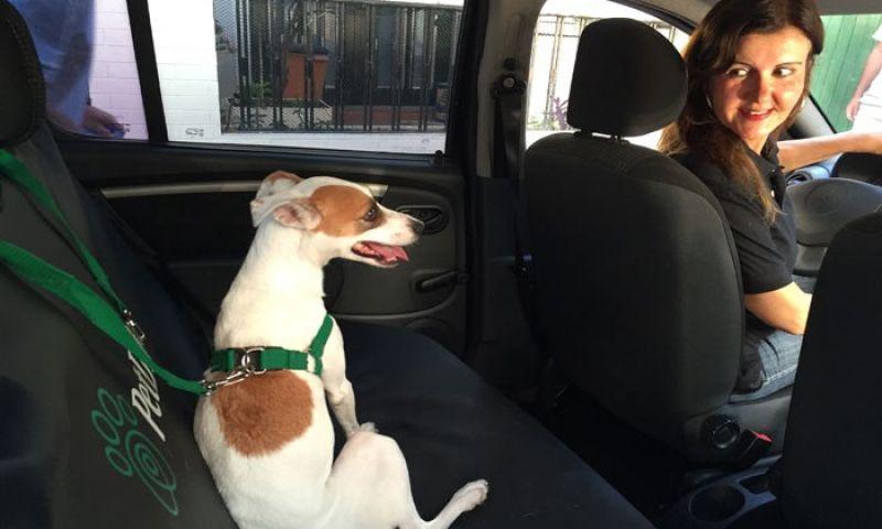 'Uber dos pets' humaniza o transporte dos animais de estimação