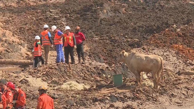 Ibama aplica multa diária à Vale por falhas no salvamento de animais