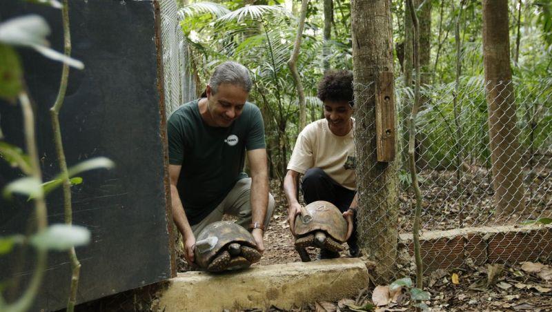 Depois de 200 anos, jabutis voltam ao Parque Nacional da Tijuca no Rio