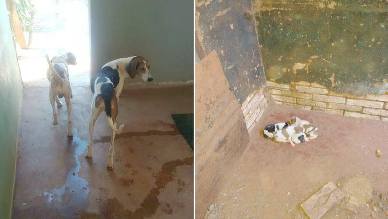 Pedreiro é multado em R$ 21,5 mil por deixar cães sem comida e na sujeira