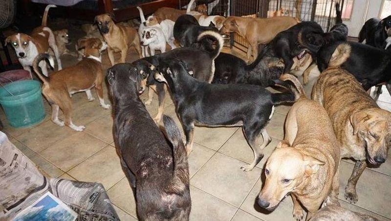 Mulher leva pra casa 97 cachorros e protege do furacão Dorian