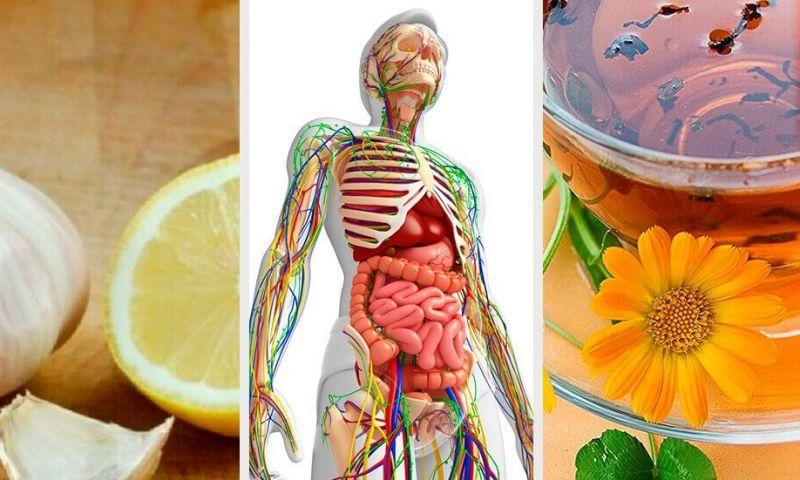 6 remédios naturais para desintoxicar o sistema linfático