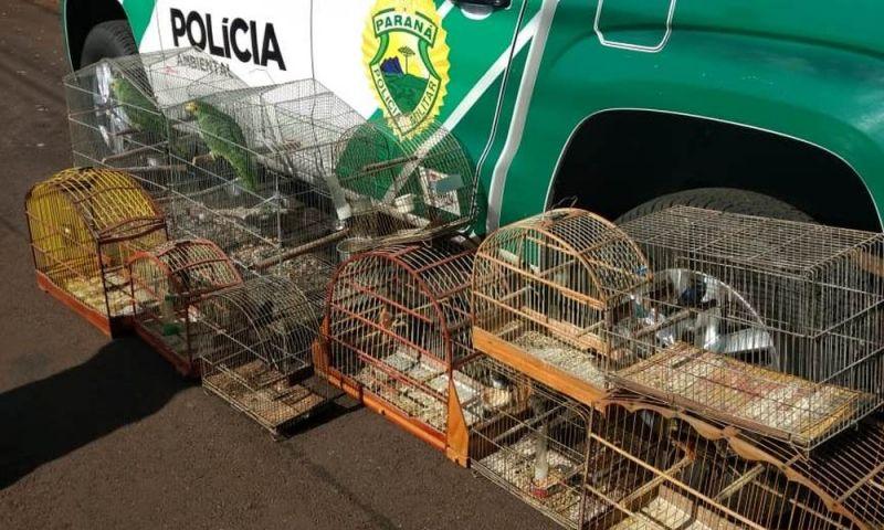 Operação Canário Pistola prende 10 pessoas suspeitas de tráfico de pássaros silvestres, no Paraná