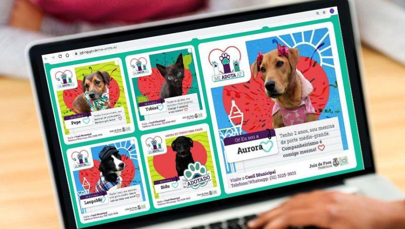 Prefeitura de Juiz de Fora lança site para adoção de animais do Canil Municipal