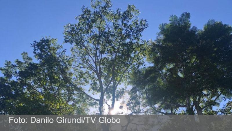 Brumadinho: pesquisadores usam técnica inédita para reflorestar área atingida por rompimento
