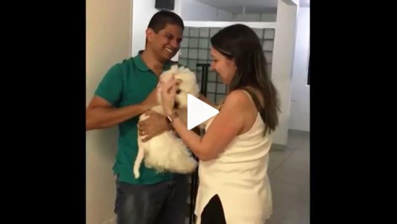 Cadela faz festa ao reencontrar donos após ser levada em roubo a carro de luxo; veja vídeo
