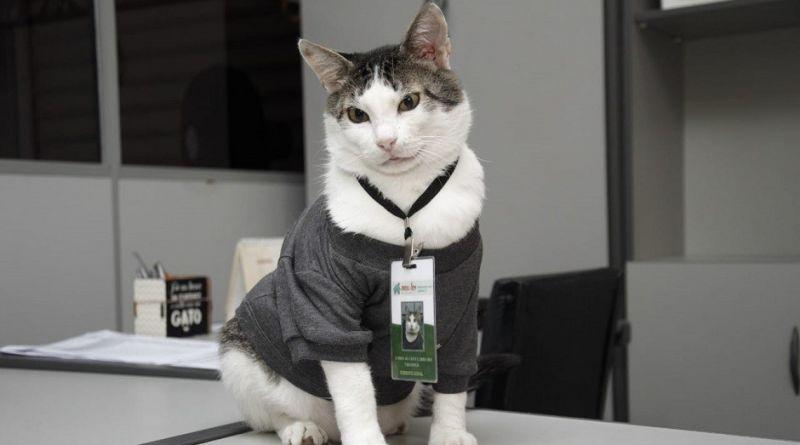 Gato contratado como gerente triplica faturamento de empresa