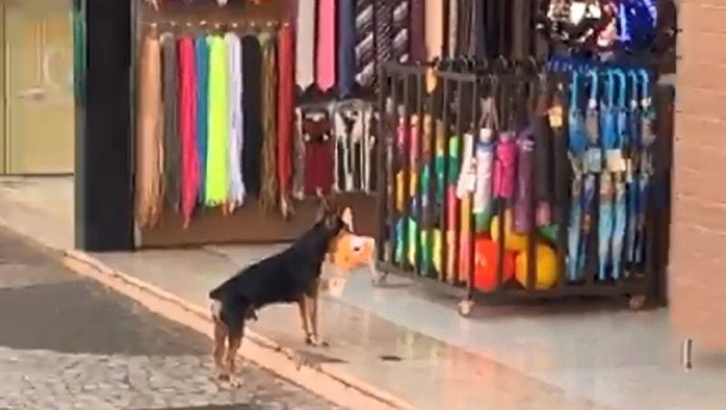 Cachorro 'furta' brinquedo de pelúcia em loja e vídeo viraliza na web