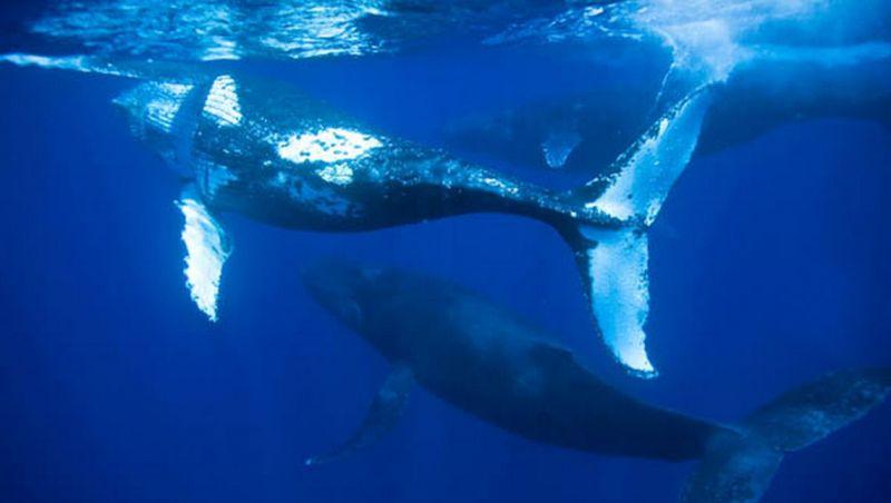 Baleias se aproximam do Porto de Santos em processo migratório