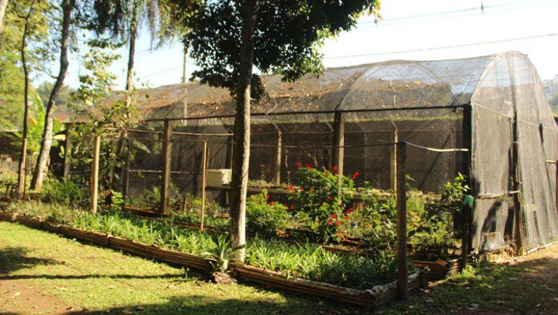 """Museu """"Mariano Procópio"""" produz mudas de plantas para serem doadas"""