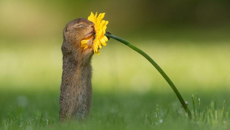 Natureza: Foto de esquilo 'apaixonado' por flor faz sucesso na internet