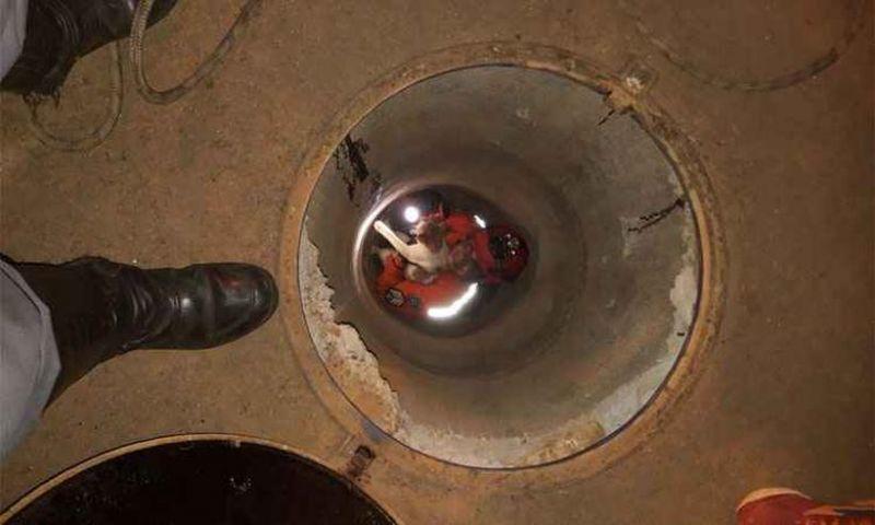 Bombeiro entra em galeria pluvial para resgatar gato em Uberaba, MG