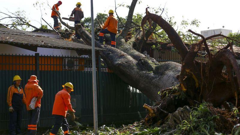 Chuva e vento derrubaram árvores e alagaram garagens em Brasília