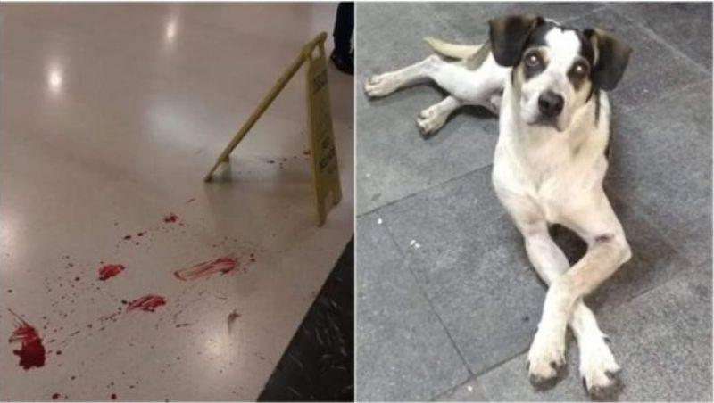 Vídeo mostra que cachorro foi agredido por segurança do Carrefour, sofreu maus-tratos e morreu por falta de socorro
