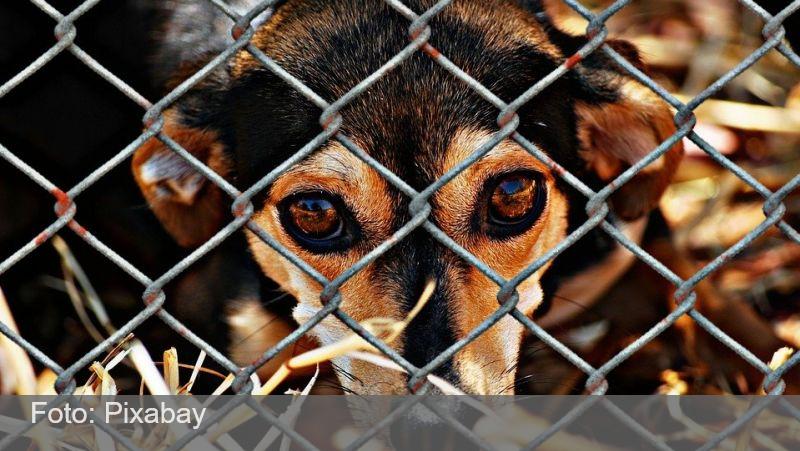 Publicada lei que proíbe sacrifício de animais pelas zoonoses
