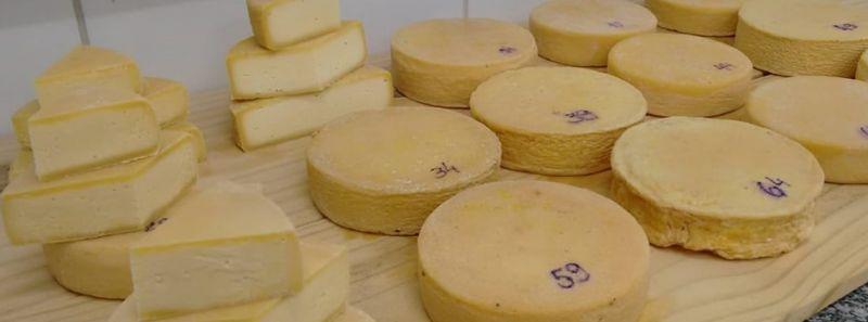 Pesquisas aprimoram queijo artesanal mineiro