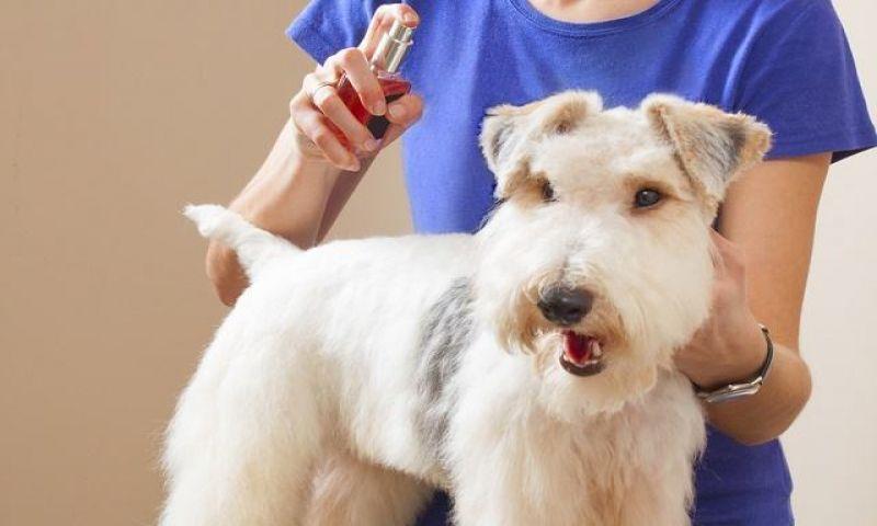 Perfumes de humanos em animais fazem mal aos bichos