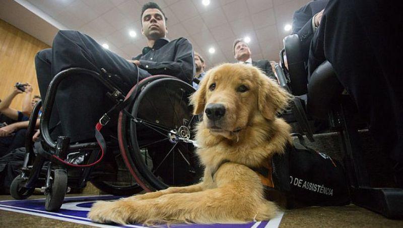 Cadela ajuda atleta da seleção de rúgbi em cadeira de rodas