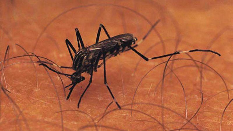 PJF realiza ações de combate e prevenção ao Aedes aegypti