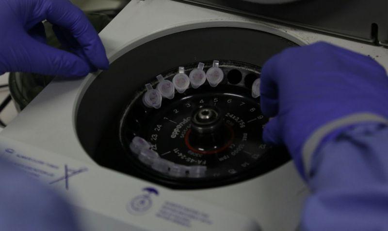 Coronavírus: cientistas britânicos começam a testar vacina em ratos