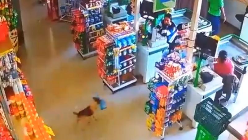 Cachorro entra em mercado, rouba saco de pão e vídeo viraliza; assista