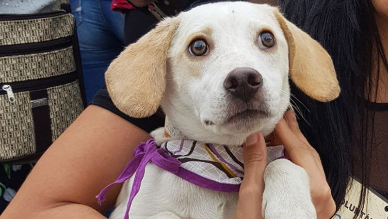 Cães ganham novos lares em evento do Canil Municipal de Juiz de Fora