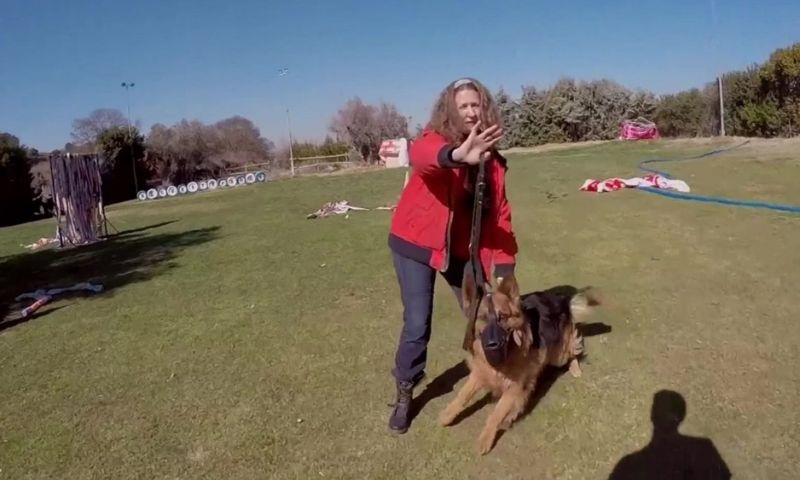 Cães protegem mulheres vítimas de parceiros violentos na Espanha