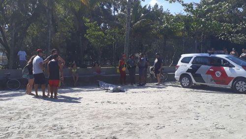 Canoísta da seleção brasileira é achado morto no litoral de SP