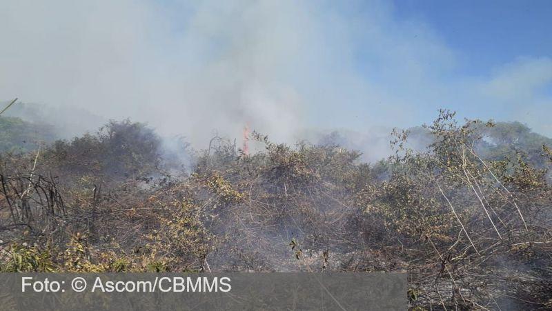 Equipes lutam para conter queimadas no pantanal