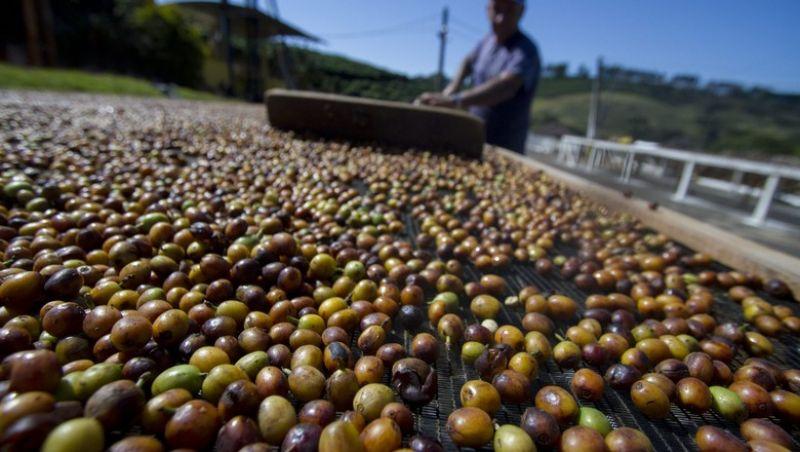 Exportações de café em março têm queda de 11% sobre o mesmo mês de 2017