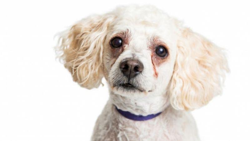 Animais de estimação podem melhorar a qualidade de vida dos seus donos