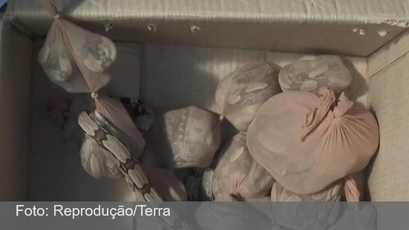 SP: Pacote com 15 jiboias é apreendido nos Correios; duas escaparam da caixa