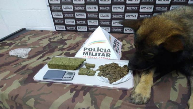 JF: Cão farejador da Polícia Militar encontra drogas no Bairro Grajaú