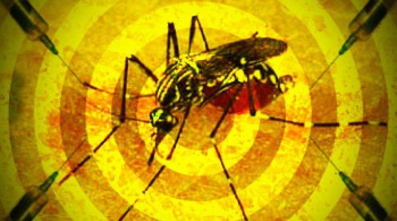 Sobe para 13 o número de mortos por febre amarela em São Paulo