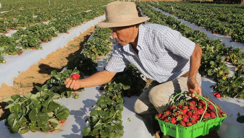 Norma que determina a rastreabilidade de vegetais já está em vigor