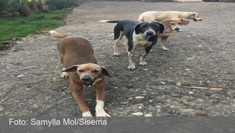 Estado publica lei que aumenta proteção animal em Minas Gerais