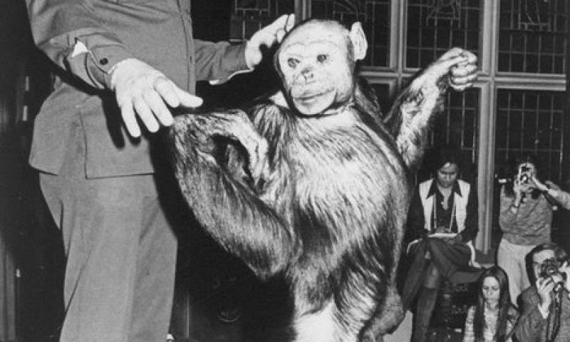 Híbrido de humano e chimpanzé existiu e foi morto por médicos, garante cientista