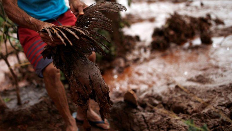 Ministério Público recomenda à Vale plano de resgate para animais em Brumadinho
