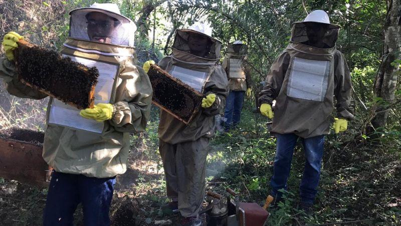 Furtos causam prejuízos a apicultores na região de São João del Rei