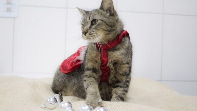 Canil Municipal de Juiz de Fora realiza último evento de adoção de animais do ano