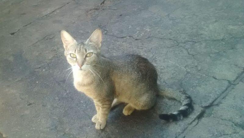 Gata salva menino de 3 anos após cascavel aparecer na cozinha de casa em Valença, RJ