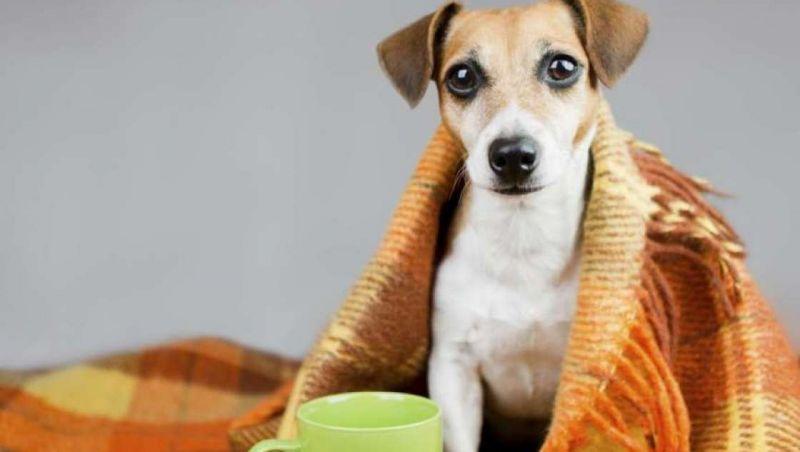 Pets precisam de cuidados especiais nas temperaturas mais baixas