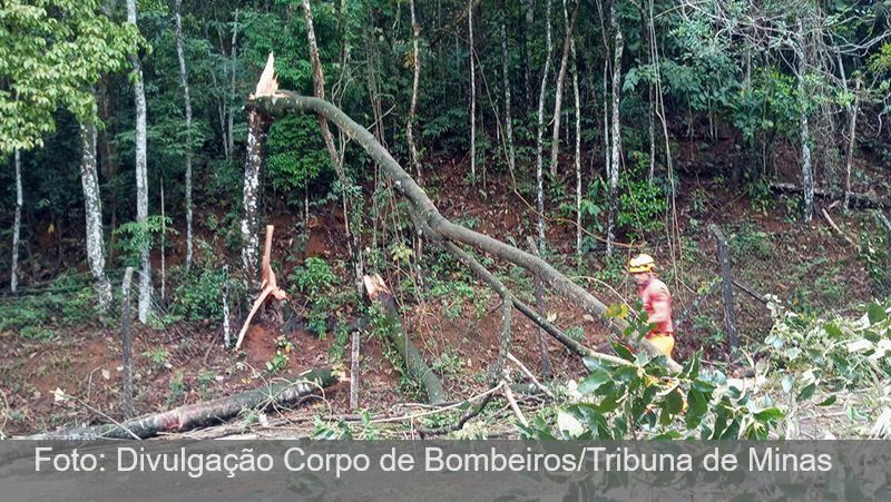 JF: Árvores derrubadas durante as chuvas são retiradas no Jardim Glória e no Vale do Ipê