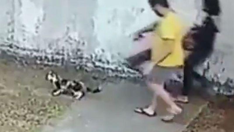 Vídeo: casal abandona e agride gata com filhotes na Zona Oeste do Rio