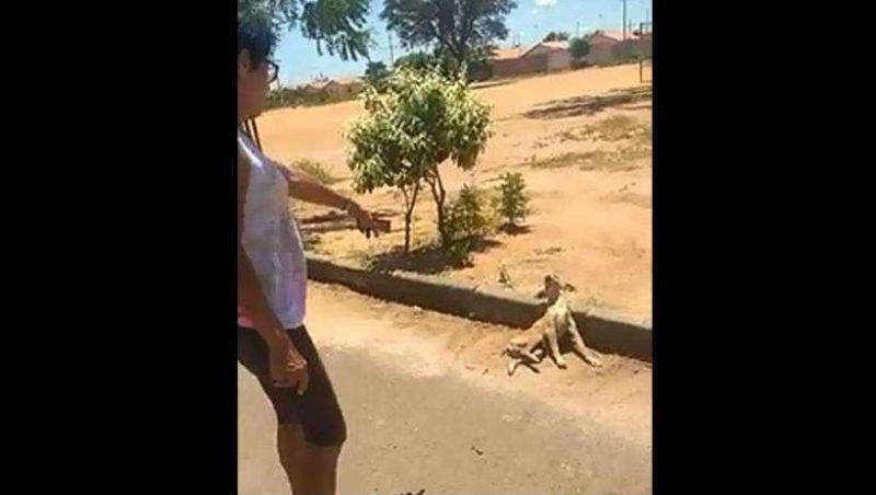 Gari quebra coluna de cachorro com chute e é preso no Norte de Minas; animal foi sacrificado