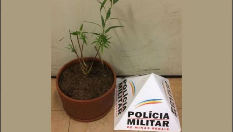 Adolescente ameaça familiares que se desfizeram de vaso com pé de maconha em Cataguases
