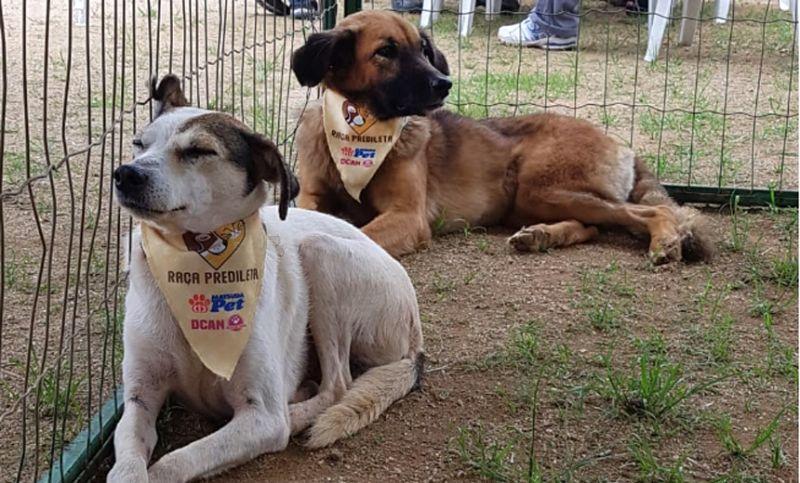 Evento de Adoção realizado na Praça do Bom Pastor em JF garante novo lar para oito animais