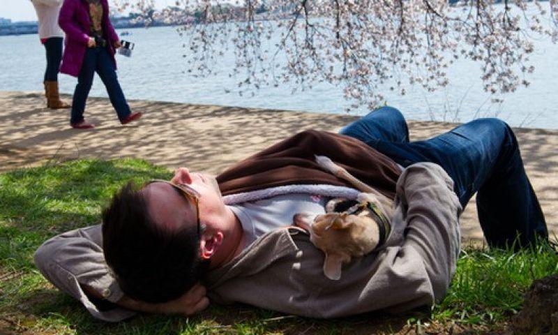 Soneca até duas vezes por semana pode reduzir o risco de infartos, diz estudo